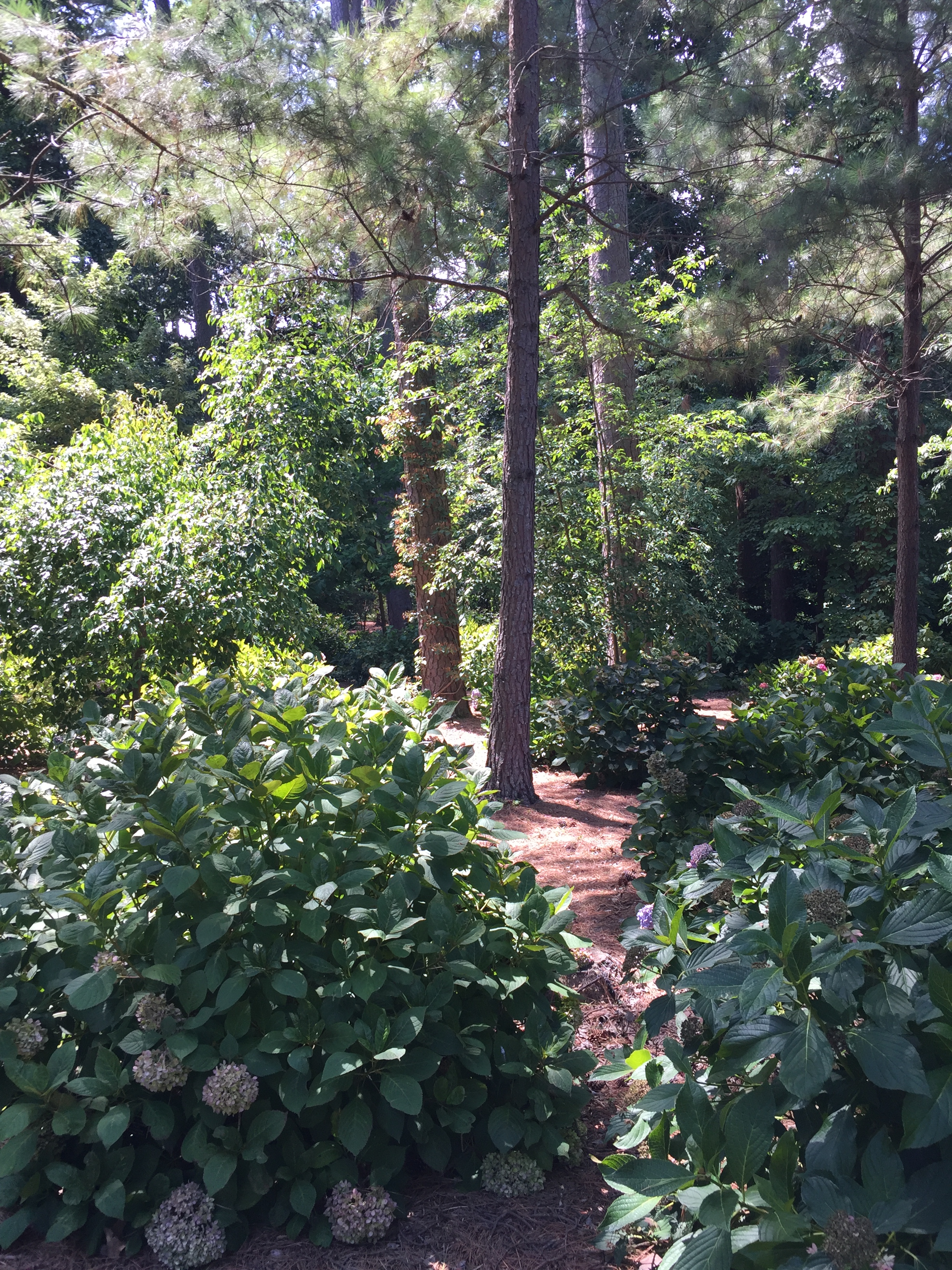 Entrance to the Kaufman Hydrangea Garden, which features both Asian bigleaf and native species. Photo © 2018 Elaine Mills.