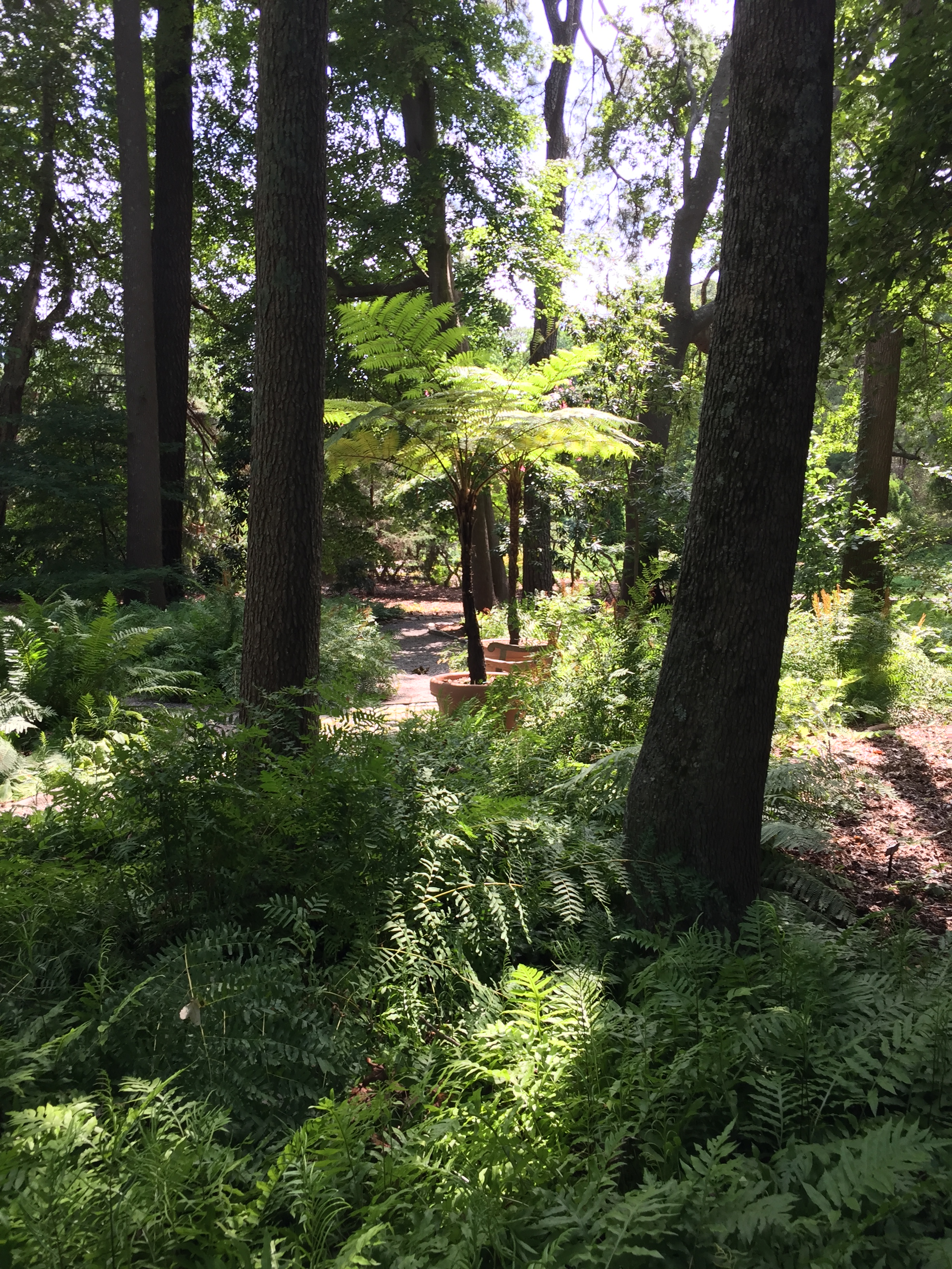 Ferns create a carpet under a canopy of maples, sweetgums, hollies, and pines in the Fern Glade. Photo © 2018 Elaine Mills.