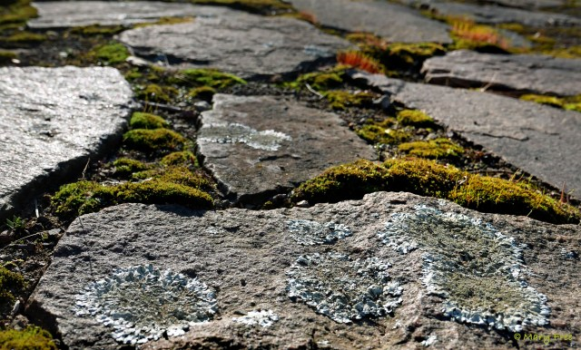 Mosses grow on top of the crushed stone used between the lichen-covered granite slabs of this Connecticut patio. © 2019 Mary Free
