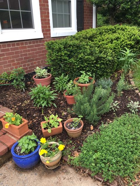 Fairlington front garden Photo © 2018 Elena Rodriguez