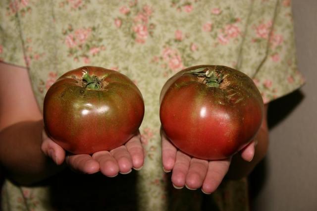 Solanum lycopersicum - Craig LeHoullier named this heirloom tomato Cherokee Purple.