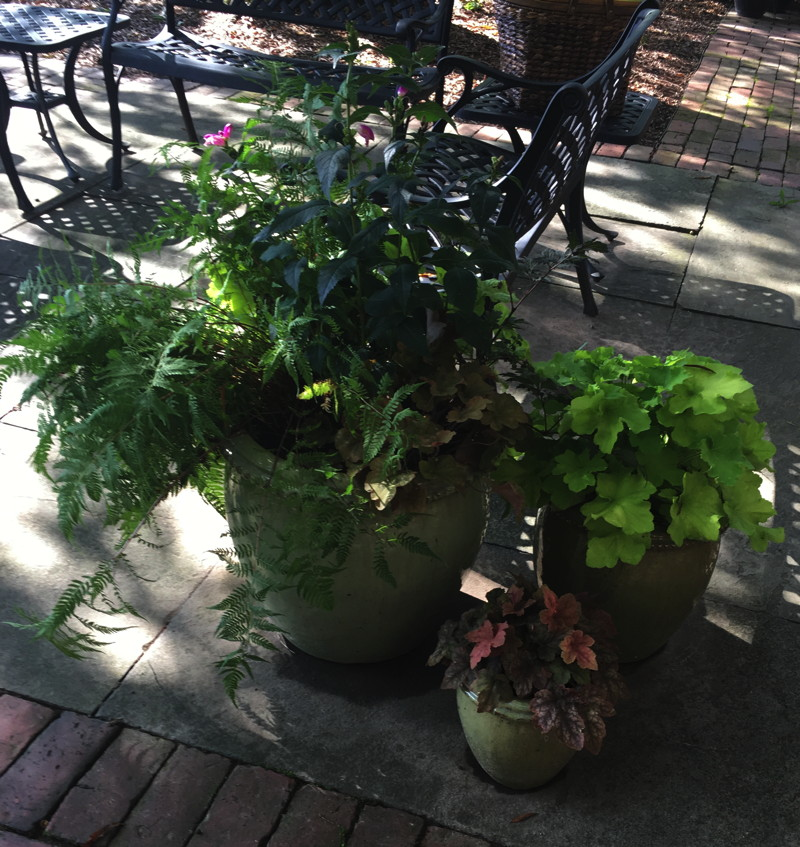 These containers display a variety of interesting foliage textures and colors of ferns and alumroots. Photo © Alyssa Ford Morel