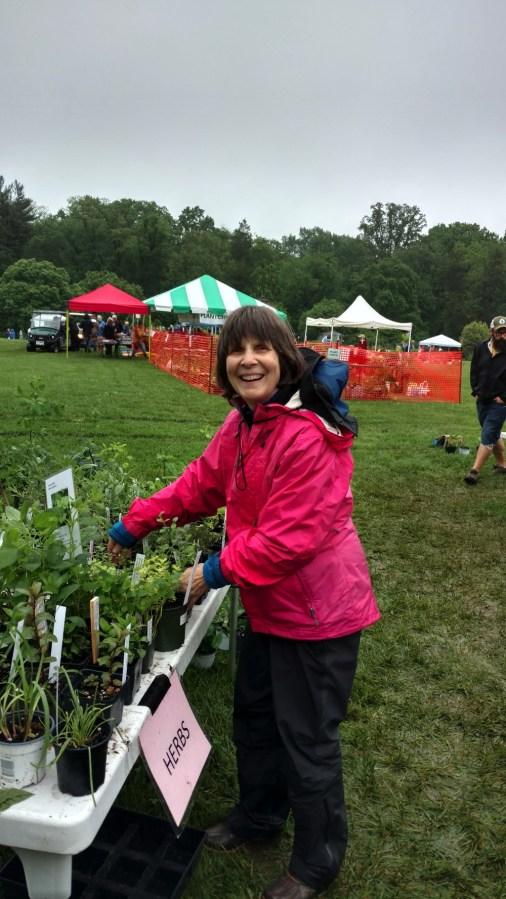 Extension Master Gardener Elaine Mills organizing herbs for sale.