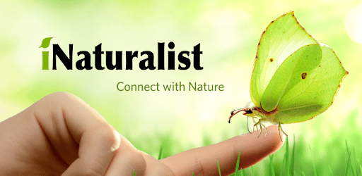INaturalist - Connect with Nature - butterfly on finger