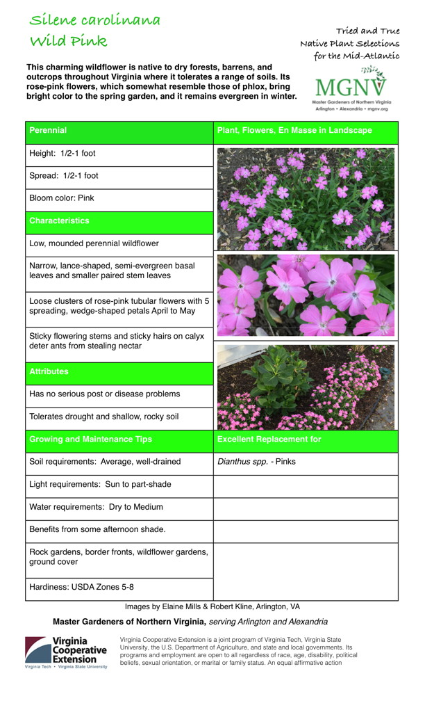 Perennial Height: 1/2-1 foot Spread: 1/2-1 foot Bloom color: Pink Characteristics Low, mounded perennial wildflower Narrow, lance-shaped, semi-evergreen basal leaves and smaller paired stem leaves Loose clusters of rose-pink tubular flowers with 5 spreading, wedge-shaped petals April to May Sticky flowering stems and sticky hairs on calyx deter ants from stealing nectar Attributes Has no serious post or disease problems Tolerates drought and shallow, rocky soil Growing and Maintenance Tips Soil requirements: Average, well-drained Light requirements: Sun to part-shade Water requirements: Dry to Medium Benefits from some afternoon shade. Rock gardens, border fronts, wildflower gardens, ground cover Hardiness: USDA Zones 5-8 Excellent Replacement for Dianthus spp. - Pinks