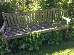 Kalmthout bench and flower bed in need of pruning, Antwerp, Belgium Photo © 2019 Nancy Smith Brooks