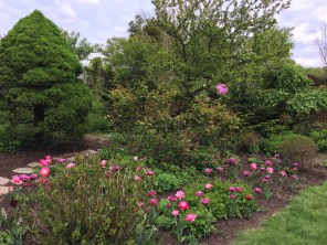 Pink-hued flowers and foliage are featured in the Pink Garden.