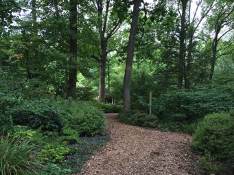 One of the wooded paths through the Azalea Garden.
