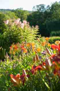"""""""When you have a large focal point like a pond, you need good-sized plantings to bring it in to scale. Here, large swaths of pink queen-0f-the-prairie (Filipendula rubra 'Venusta') bloom in the distance with bright red daylilies (Hemerocallis 'Parden Me') and heather spikes (Agastache 'Blue Fortune' bring a riot of color to the foreground."""" p.199. Photo © Susan Teare"""