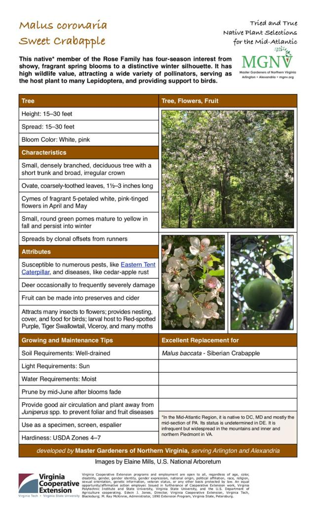 Tree Height: 15–30 feet Spread: 15–30 feet Bloom Color: White, pink Characteristics Small, densely branched, deciduous tree with a short trunk and broad, irregular crown Ovate, coarsely-toothed leaves, 11⁄2–3 inches long Cymes of fragrant 5-petaled white, pink-tinged flowers in April and May Small, round green pomes mature to yellow in fall and persist into winter Spreads by clonal offsets from runners Attributes Susceptible to numerous pests, like Eastern Tent Caterpillar, and diseases, like cedar-apple rust Deer occasionally to frequently severely damage Fruit can be made into preserves and cider Attracts many insects to flowers; provides nesting, cover, and food for birds; larval host to Red-spotted Purple, Tiger Swallowtail, Viceroy, and many moths Growing and Maintenance Tips Soil Requirements: Well-drained Light Requirements: Sun Water Requirements: Moist Prune by mid-June after blooms fade Provide good air circulation and plant away from Juniperus spp. to prevent foliar and fruit diseases Use as a specimen, screen, espalier Hardiness: USDA Zones 4–7 Excellent Replacement for Malus baccata - Siberian Crabapple *In the Mid-Atlantic Region, it is native to DC, MD and mostly the mid-section of PA. Its status is undetermined in DE. It is infrequent but widespread in the mountains and inner and northern Piedmont in VA.