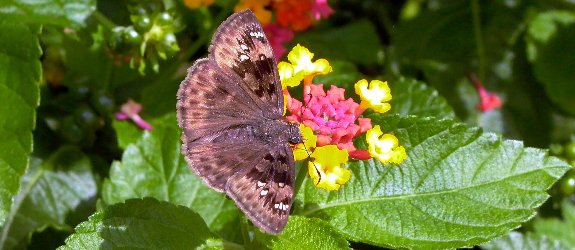 Small Space Gardening For Pollinators Online Master Gardeners Of