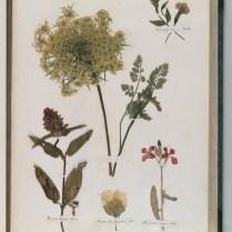 herbarium_images