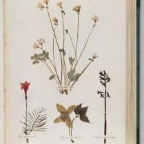 herbarium_images3