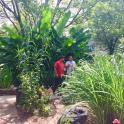 Tropical plants enclose a private oasis