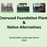 Overused Foundation Plants