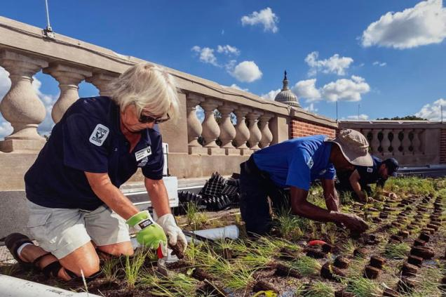 Employees and volunteers install 29,000 plants on green roof.