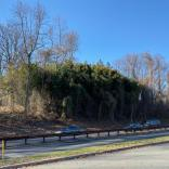 Another view of bamboo along roadside in December. Photo © Elaine Mills
