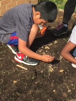 A 4-H student with a purpose—planting the perfect radish.