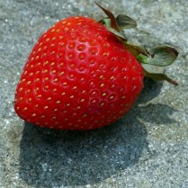 An aggregate of achenes atop the fleshy receptacle of Fragaria (strawberry) in August. Photo © Mary Free