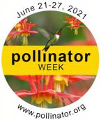 Pollinator Week Logo 2021 - Hummingbirds and Lonicera sempervirens