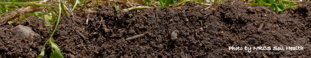 photo of healthy soil with roots