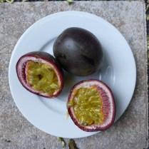 Tropical Passiflora edulis (purple passionfruit) will grow in USDA Zones 10–12. Photo courtesy of Martin Thoma