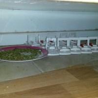 DIY Pest Control - best strategy?