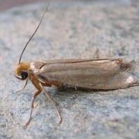 Moth Damage
