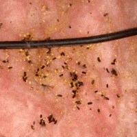Guaranteed Mice Treatment