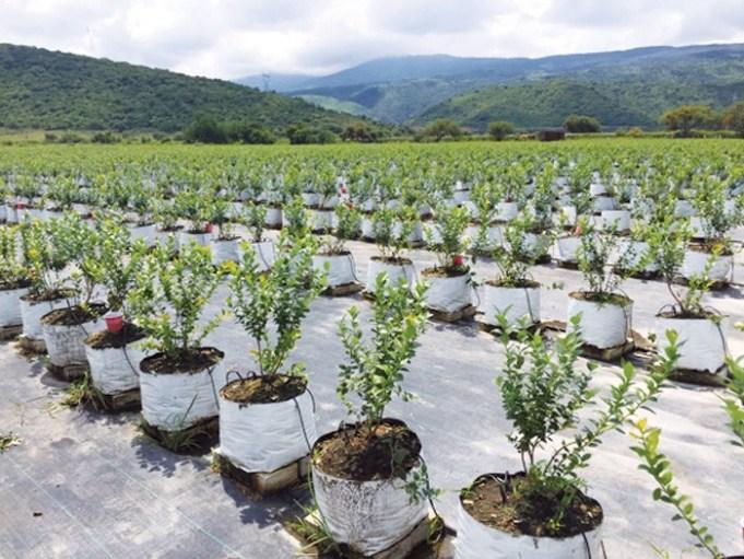 Green Diamond Coco Fiber Grow Slabs, horticulture, cannabis