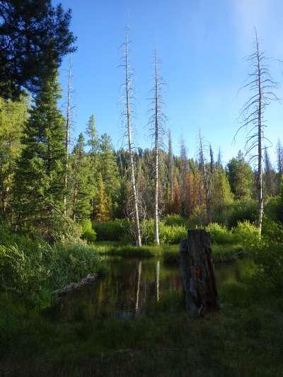 Trees across the pond.