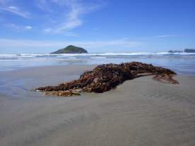 Islands of kelp and rock