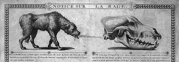 587px-rabid_dog_text_and_illustration-_wellcome_l0014575