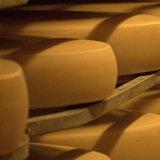 сыр в камере для созревания сыра