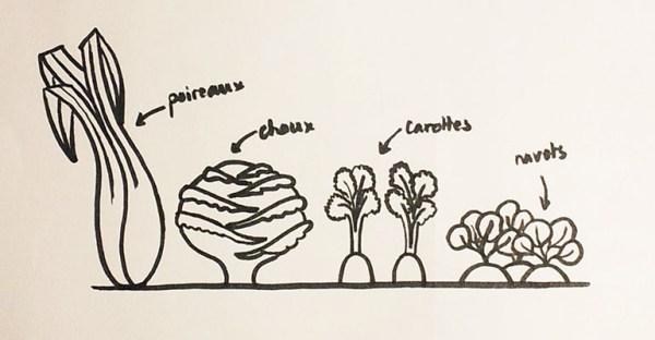 Etudes dessins des légumes du potager, page 2 projet de livre pop-up