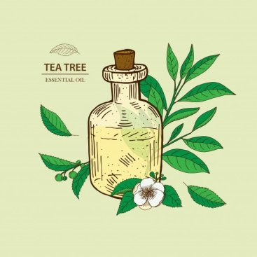 tea-tree-essential-oil