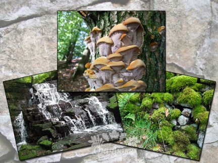 OutBiome is a landscape and nature gallery
