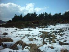 Neige sur les Monts d'Arrée