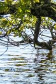 L'étang du Caro