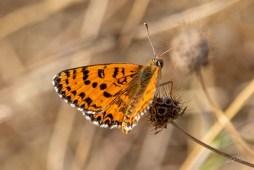 Papillons et autres