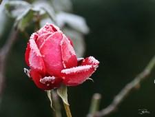 Givre de janvier