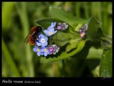 abeille_1763