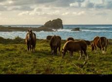 chevaux_6363