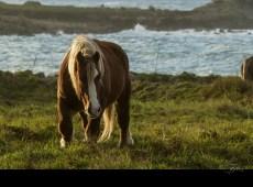 chevaux_6364
