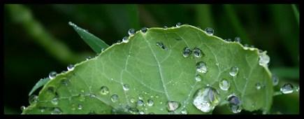 Droplet_5099