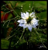 Droplet_5100