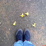 memories vidya sury
