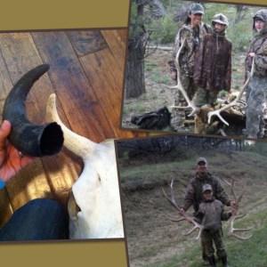 Antlers vs Horns