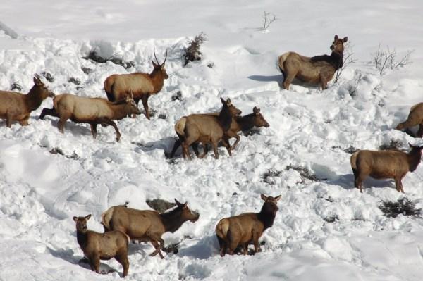CPW-Elk-Hunt-Colorado-31d093de-9033-418e-8490-70c30517129c