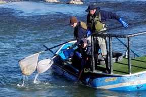 CPW-Biologists-weigh-measure-fish-Pueblo-CO-12-2017-ee24d802-e34f-4268-be3a-272218925f70
